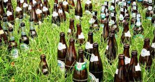 Bier Flaschen Gras Wiese